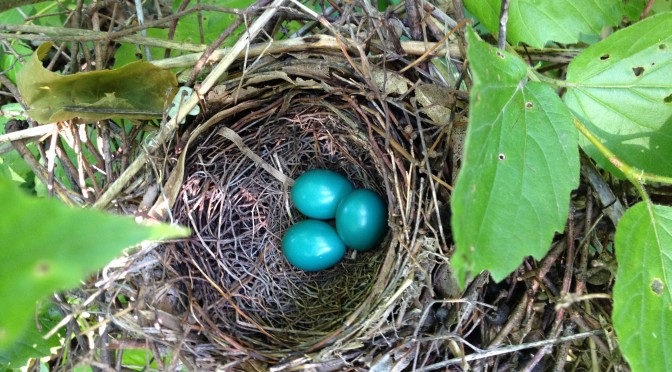 Robins Nest at Juneberry Hill