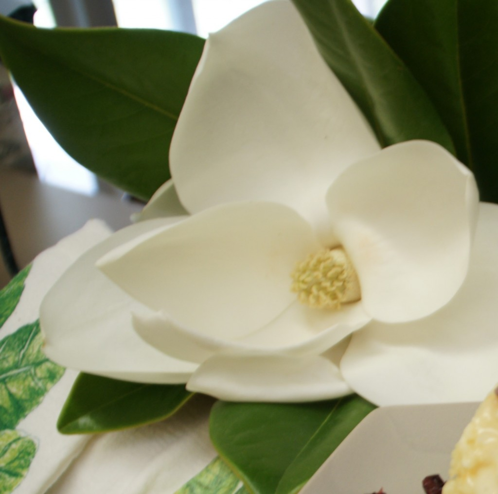 I never realized how wonderful Magnolia blooms smell until I had some trees in my yard.