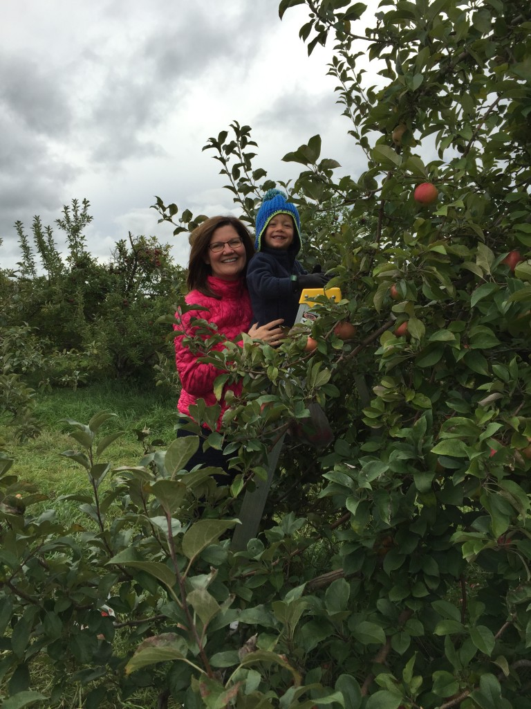 We had to climb to the top to find all of the best apples. No low hanging fruit for us.